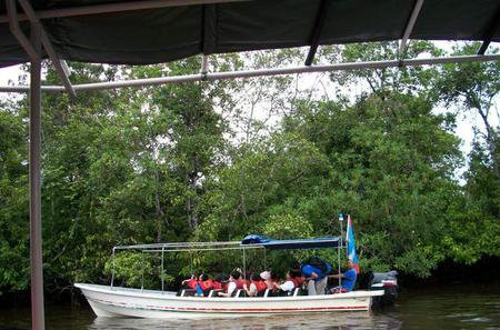 Half-Day Tour Klias Wetland Cruise and Fireflies in Kota Kinabalu