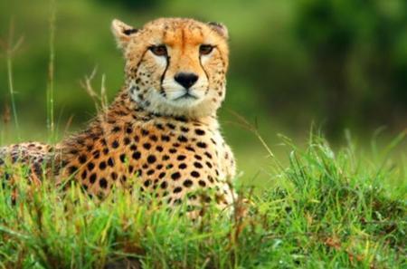 Kruger National Park Overnight Guided Safari Tour from Johannesburg