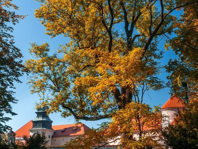 Polish Castles - Eagles Nests Trail Day Trip from Krakow