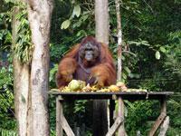 Semonggok Wildlife Rehabilitation Centre