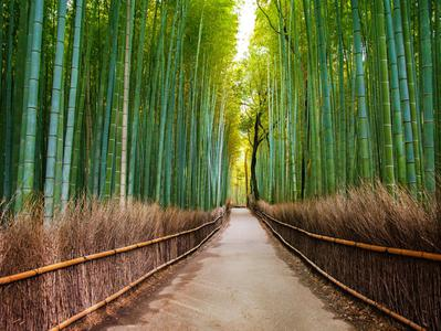 Sagano Bamboo Grove and Arashiyama Walking Tour with Optional Yakatabune Lunch Cruise