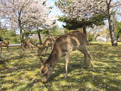 Kyoto and Nara in One Day
