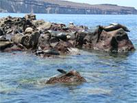 Espiritu Santo Island National Park and Sea Lion Colony