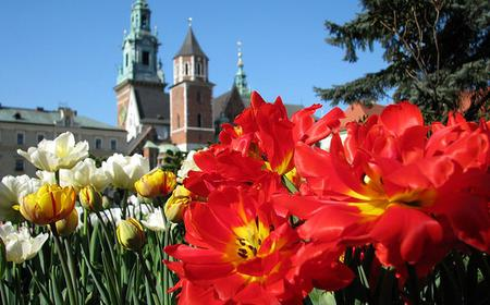 Full-Day Tour of Cracow from Warsaw with Entrance Fees