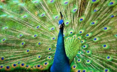 Kuala Lumpur:3.5-Hour Bird Park and Garden Tour