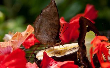 Kuala Lumpur Butterfly and Bird Park Nature Tour