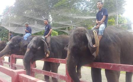 Kuala Lumpur: Batu Caves, Elephants and Fireflies Tour