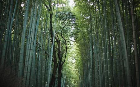 Kyoto: Western Kyoto Arashiyama Tour