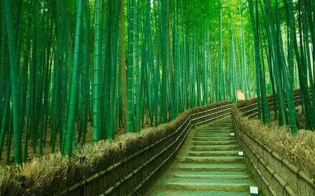 Private Kyoto Arashiyama Customised Half-Day Tour