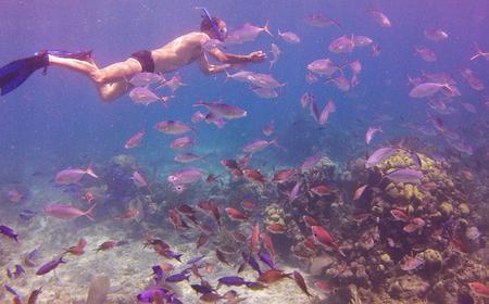Catalina Island Full-Day Snorkeling Tour from La Romana