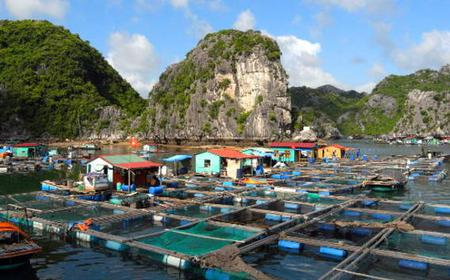 Hanoi Halong Bay: Private or Group Day Trip from Hanoi