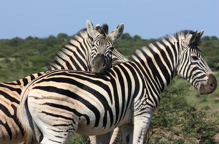 Hluhluwe Safari Guided Day Tour from Durban