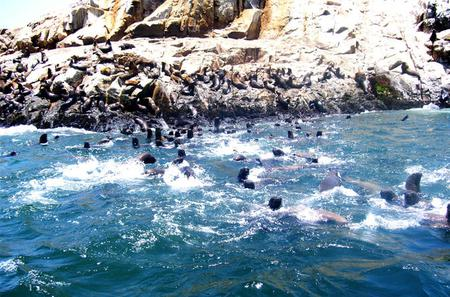 Palomino Islands Cruise and Swimming with Sea Lions Experience from Lima
