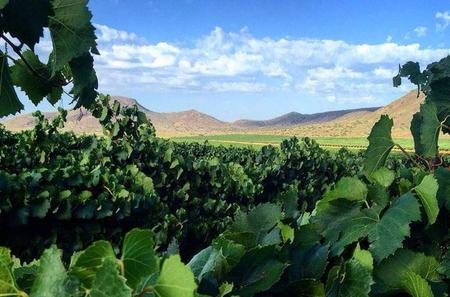 Private Wine Tour in Franschhoek from Franschhoek