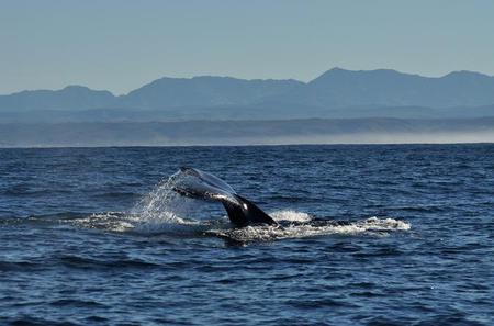 Whales and Wine Day Tour from Cape Town