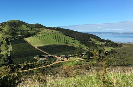 Half-Day Vineyards and Bush Walk on Waiheke Island
