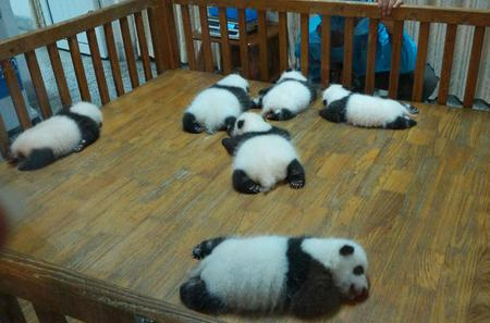 Private Chengdu Experience Tour including Giant Pandas and the Sanxingdui Museum