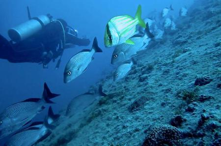 Diving at Barra Beach in Deep Waters