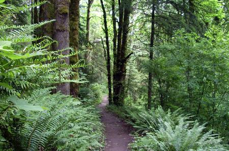 Portland's Forest Park Hike and Picnic