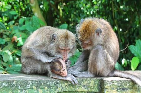 Private Tour: Full-Day Bali Paradise Tour with Monkey Forest Including Buffet Lunch and Dinner