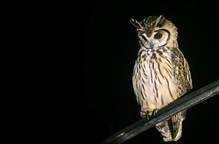 Owl Quest Night Tour from la Fortuna