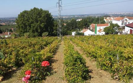 Azeitão: Private Full-Day Wine Experience from Lisbon