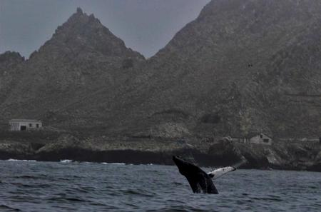 All Day Farallon Islands Whale Watching Excursion