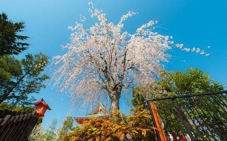 Easter in Tokyo: Explore the City with a Local Host