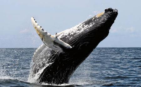 Full-Day Whale Watching to Hermanus from Cape Town