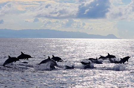 Pamilacan Island Whales and Dolphins Watching from Tagbilaran City