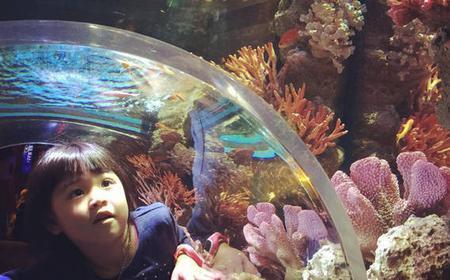 Bangkok: Sea Life Ocean World & Madame Tussauds Combo Offer