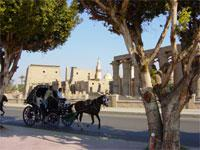 Karnak and Luxor Temple by Horse Carriage - Private Tour