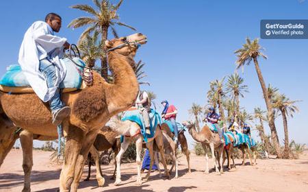 Marrakech Rock Desert and Palm Grove: Camel Ride