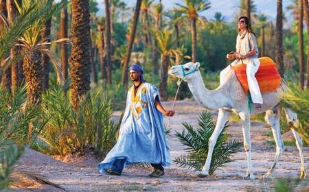 Marrakech Camel Trek in the Palm Grove