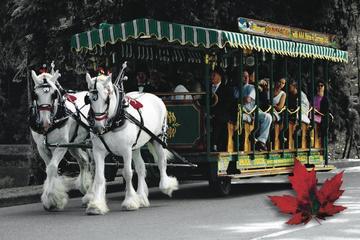 Stanley Park Horse-Drawn Tours