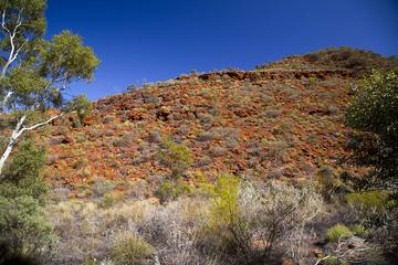 Palm Valley 4WD Tour from Alice Springs