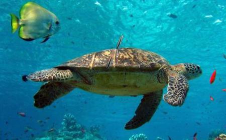 2 Days Scuba Diving Course in Marsa Alam