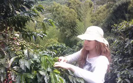 Medellin Coffee Experience and Workshop