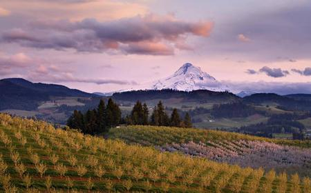Mendoza 4-Day Sightseeing and Wine Tour