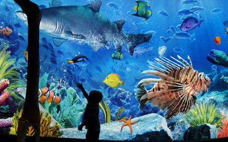 Bangkok: Sea Life Ocean World Entrance w/ Private Transfer