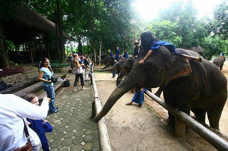 Chiang Mai: Lampang Elephant School and Temples Tour