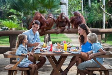 Breakfast with the Orangutans at Bali Zoo