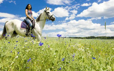 Tuscan Horseback Tour from Florence or Siena
