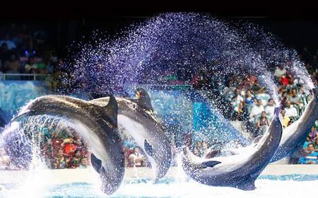 Illusion, Dolphin & Seal Shows at Dolphinaruim