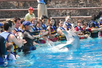 Swim with Dolphins in Six Flags Mexico City - Great for Kids