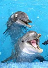 Dolphin Swim with Mexico City Six Flags Ticket