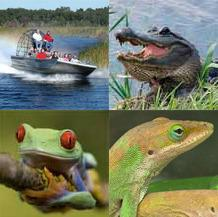 Everglades National Park By Airboat: Ecosafari Tour