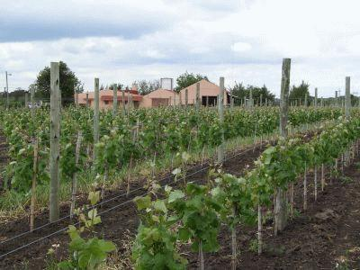 Uruguay Private Winery Tour With Wine Tasting and Lunch