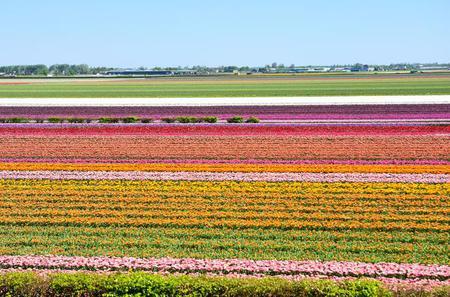 Small Group Day Trip to Keukenhof and Flowerfields - Volendam and Zaanse Schans from Amsterdam