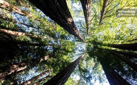 Ganztägige Wein- und Biertour: Muir Woods und Sonoma